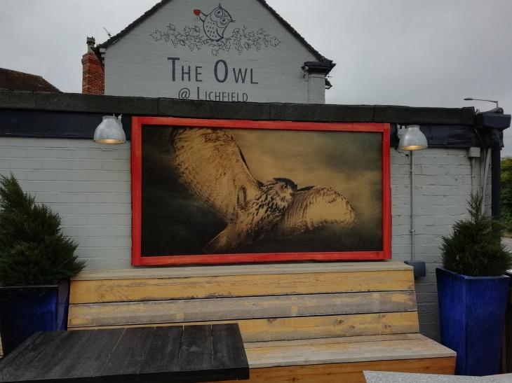 Lichfield Owl 17.06.18  (27).jpg